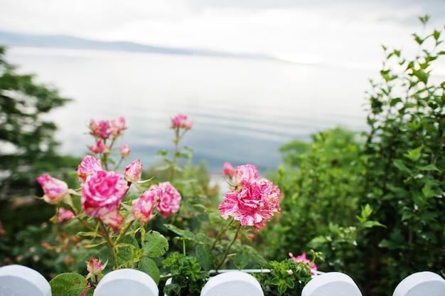 Кусты роз на фоне моря.