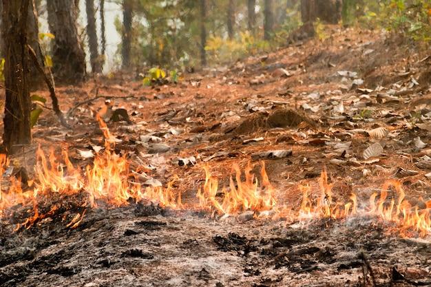 Bushfire in forest ,thailand