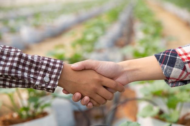 Деловое соглашение пожимает руку на плантации дыни