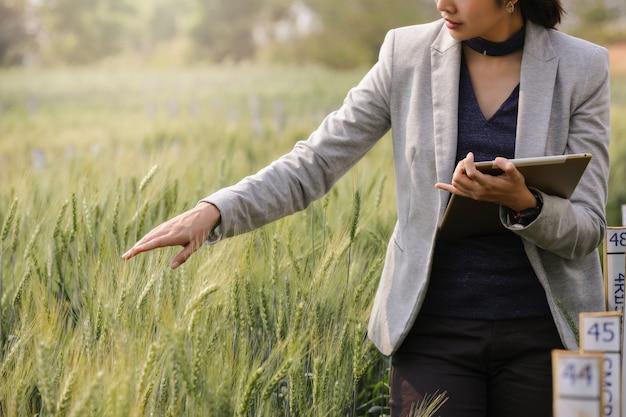 大麦畑の保育園、スマート農業、デジタル技術、農業革新の概念で視覚的なアイコンを備えたタブレットコンピューター分析データ開発を使用したビジネス分析。