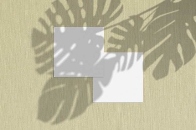Business card . natural overlay lighting shadows the monstera leaves. square business cards. scene of leaf shadows on olive background.