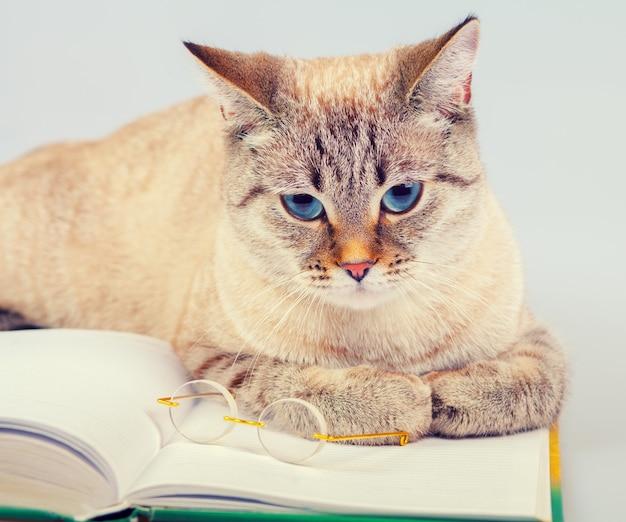 Деловой кот с книгой и очками