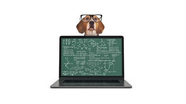 ラップトップコンピューターの3dレンダリングを使用したビジネスコンセプトのペットの犬