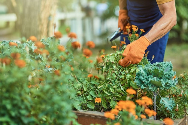 Businessman hands in gloves working with gardening tool