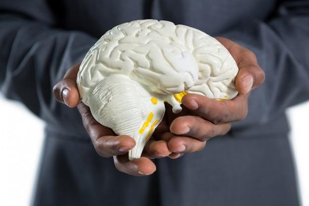 Businessman holding anatomy brain
