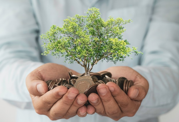 Businessman holding coins in hand with growth tree.