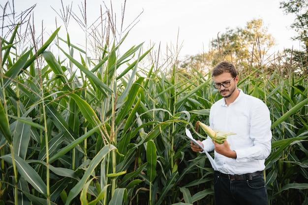 Бизнесмен на кукурузном поле проверяет плантацию