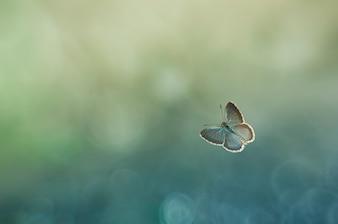 butterflies and light