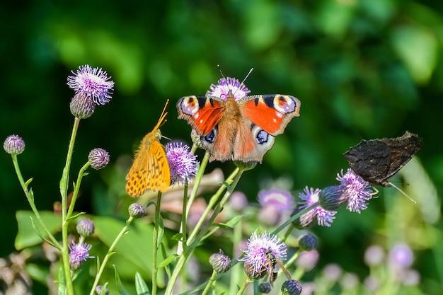 蝶や他の昆虫が花の上に座っています