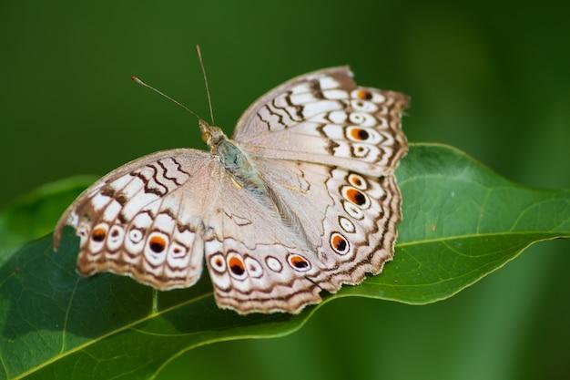 蝶は緑の葉の上に住んでいます。