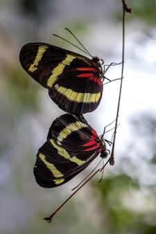나뭇 가지에 나비
