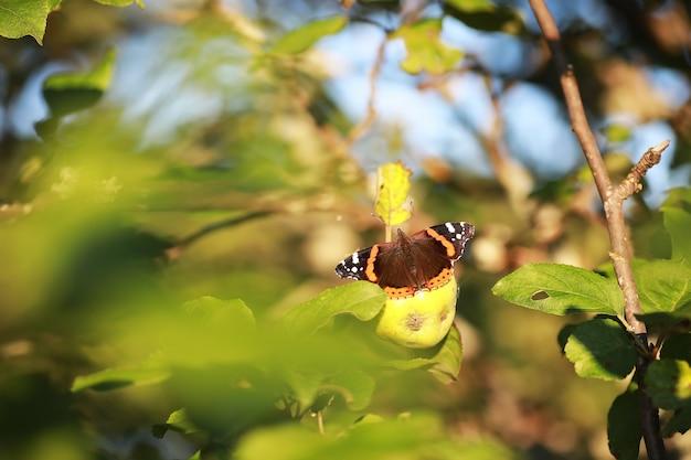 나무에 나비입니다. 나비와 꿀입니다. 자작나무 주스. 숲에서 나비입니다. 자연. 숲. 나비.
