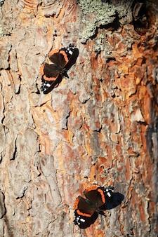 Бабочки на дереве. бабочки и нектар. березовый сок. бабочки в лесу. природа. лес. бабочки.