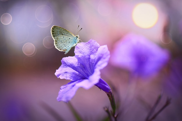 Бабочки на цветке