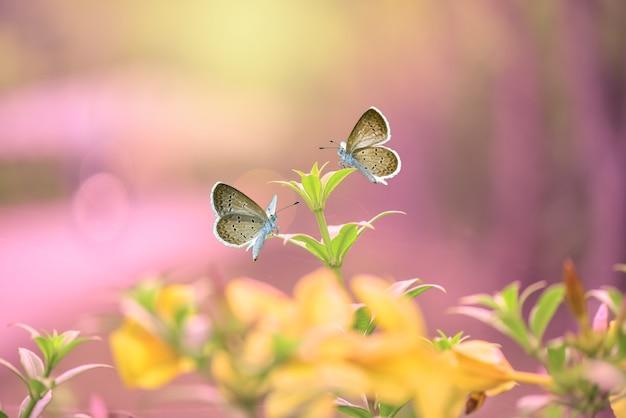 Бабочки на цветах в тропическом саду