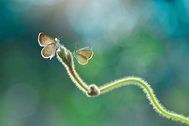 Бабочки на траве в саду