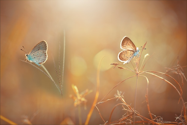 Бабочки на траве