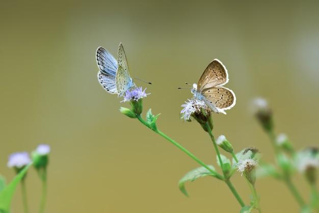 Бабочки на зеленом фоне