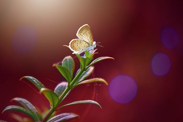Бабочки на листе