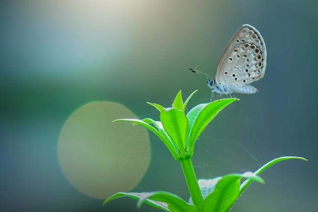 Бабочки на листьях