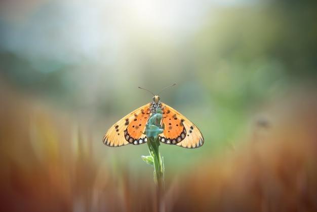Бабочки на фоне природы