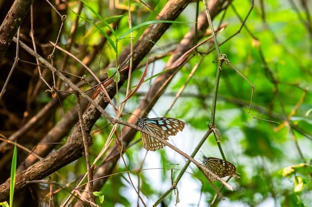 Бабочки на острове из утренних веточек выглядят красиво чаще всего