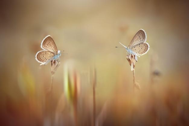 Бабочки в тропическом саду