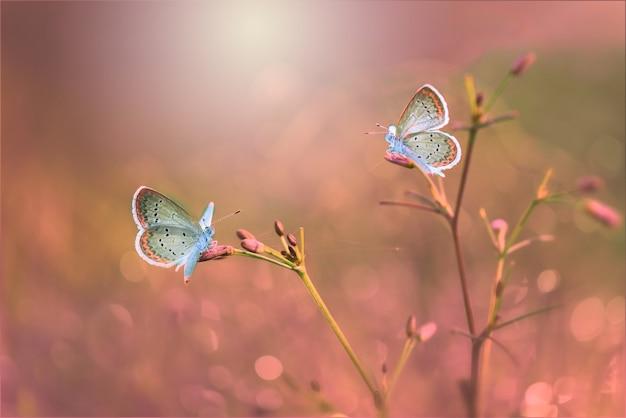 Бабочки на ветках в тропическом саду