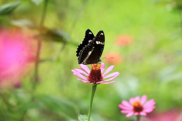 Butterflies perch on flowers in tropical forests