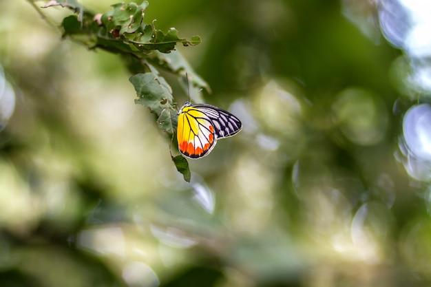 Окунь бабочек на фоне зеленых листьев и боке