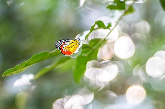Бабочка окунь на листе зеленого
