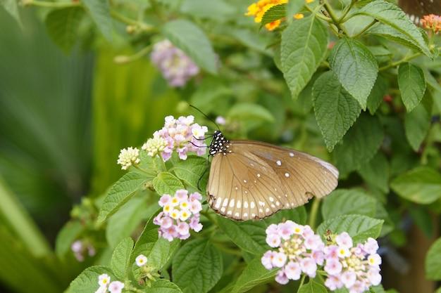 Butterflies perched on flowers in a garden.