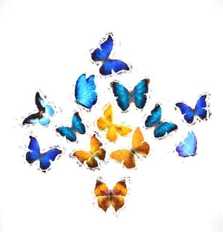 蝶。熱帯の昆虫。白い背景で隔離。デザインのテンプレート