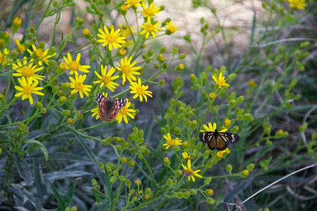Butterflies and wild flowers in spring