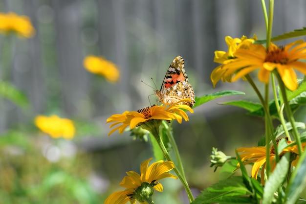 蝶の提督と花。晴れた日の黄色い花の美しい蝶。春と夏の背景。大きい