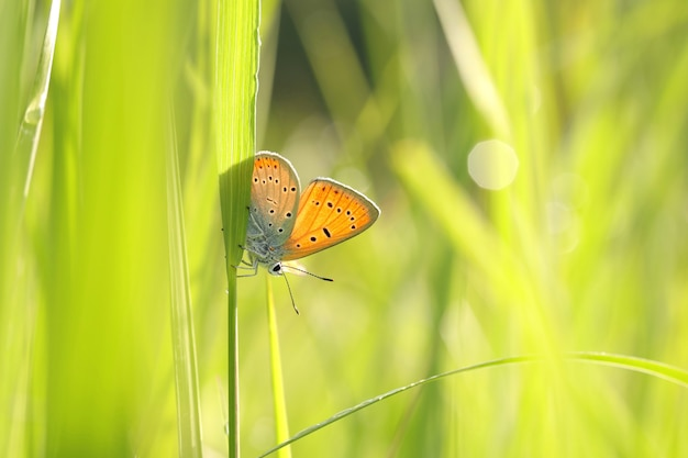 日差しの中で新鮮な緑の草の間で蝶