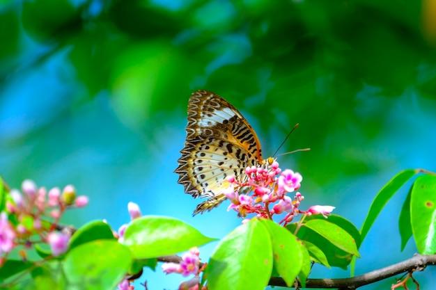 Бабочка и розовый цветок