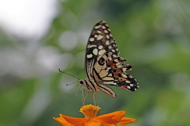 나비 꽃에 아름다운 나비