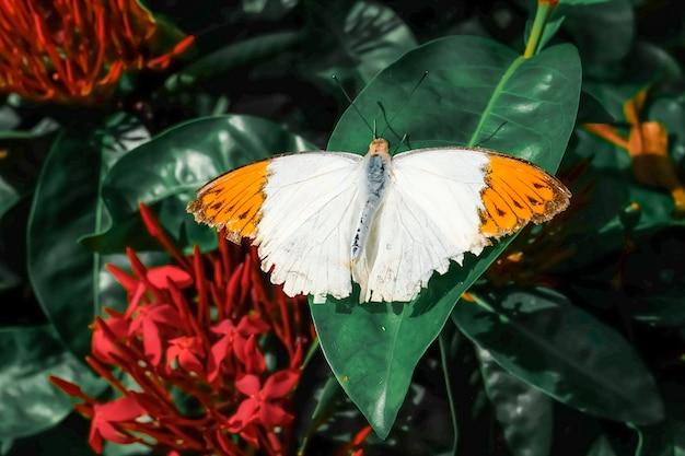 Бабочка. красивая тропическая бабочка на размытом фоне природы. красочные бабочки