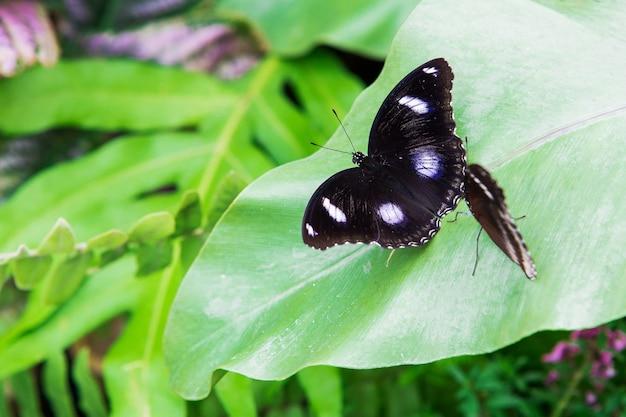 Butterfly black polka dots