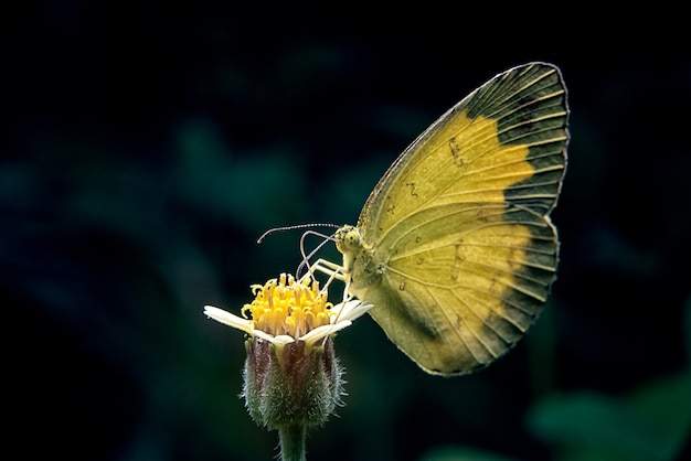 Butterfly catch on yellow flowers in garden park.