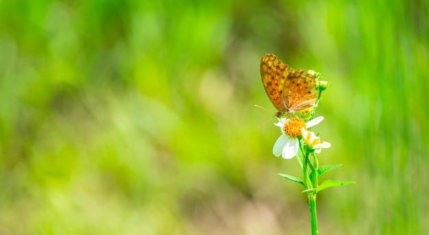 Бабочка цепляется за пыльцу желтого цветка.