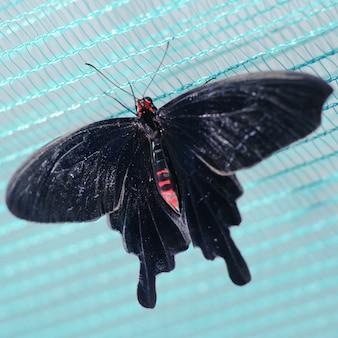 蝶は青い背景に閉じます