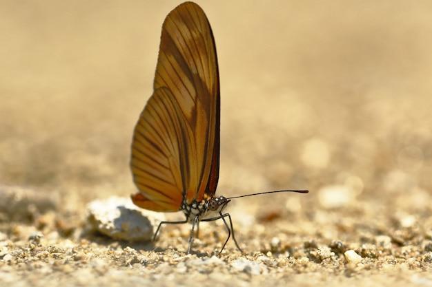 Бабочка (dryas julia) от влажности почвы
