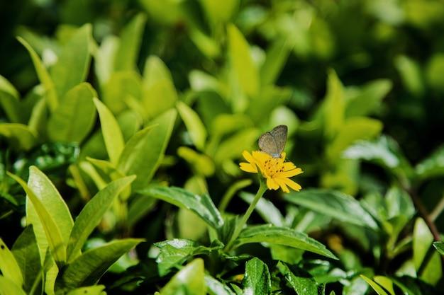 Butterfly feeding honey on yellow flower in garden