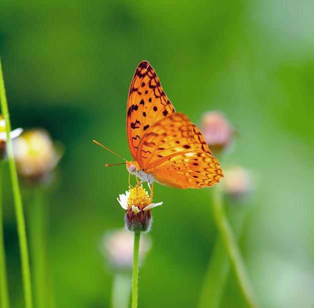 Кормление бабочки на цветке