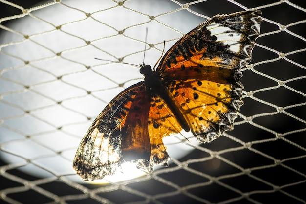 그물에 나비 날아