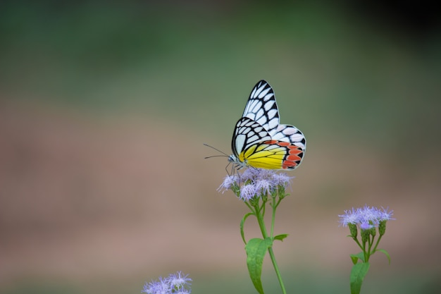 Butterfly on the flower plants