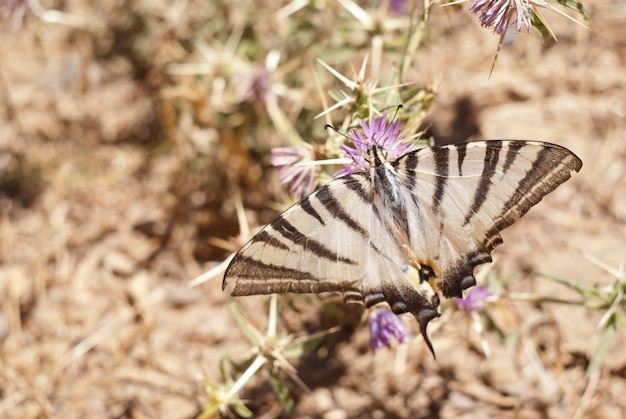 Butterfly on a flower in sicilian countryside