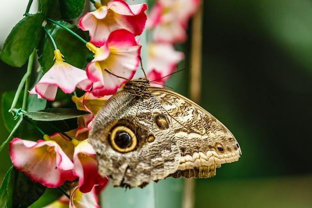 Butterfly on flowers schmetterlinghaus